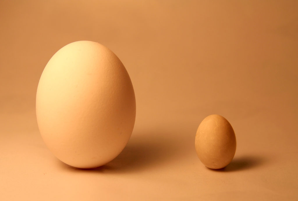 1 large egg and 1 small egg for contrast