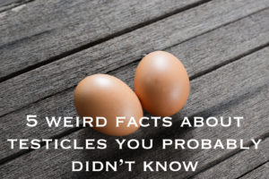 Two eggs on wooden floor with text reading 5 weird facts about testicles you probably didn't know