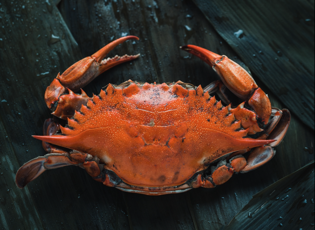 Red crab on a black wooden surface