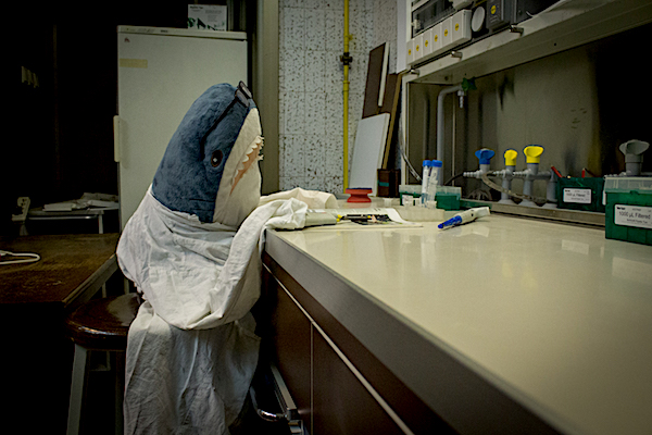 Stuffed animal wearing a lab coat sitting at a desk