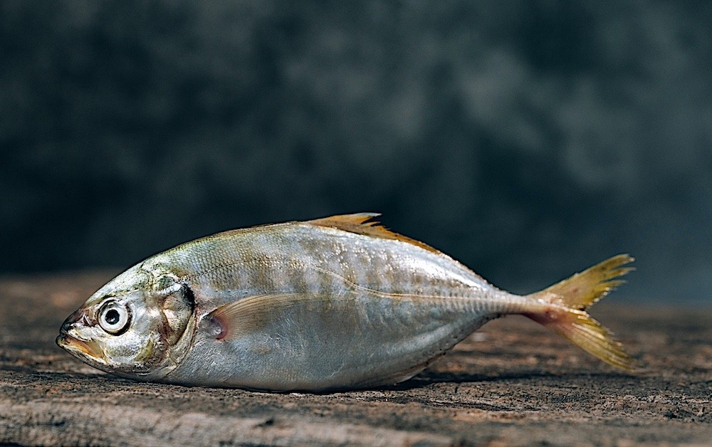 Why Your Boyfriend Smells Like Fish Down Below & What to do About it
